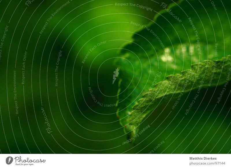 ES GRÜNT... Natur Wasser grün schön Baum Pflanze Sommer Holz Linie Wetter ästhetisch Perspektive edel Durst Anmut Zacken