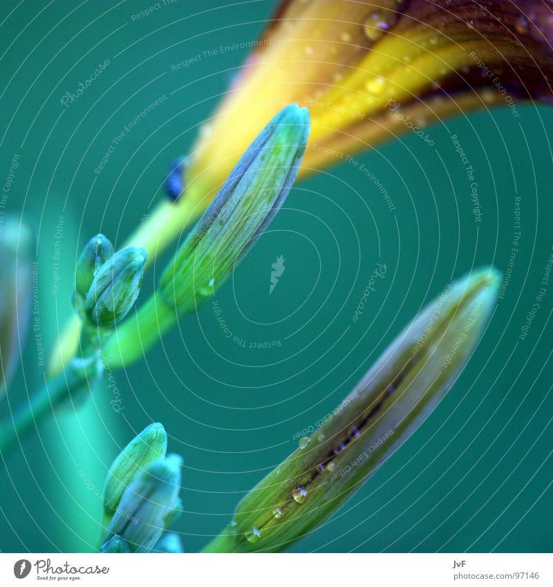[B][L][U][M][E][²] Blume grün ruhig kalt Frühling Regen nass Seil Wachstum Blütenknospen