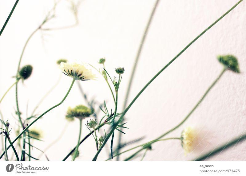 Zartheit Stil Design schön Wellness harmonisch Dekoration & Verzierung Umwelt Natur Pflanze Frühling Sommer Blume Blatt Blüte berühren Blühend schaukeln