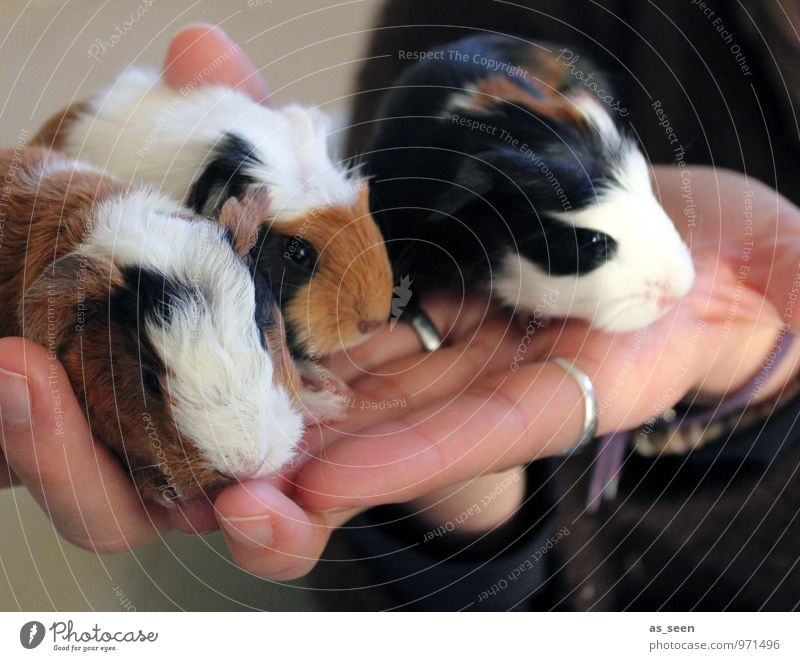 Nachwuchs Natur weiß Hand Tier schwarz Tierjunges Leben Gefühle klein braun Zusammensein authentisch sitzen Baby Tiergruppe Finger