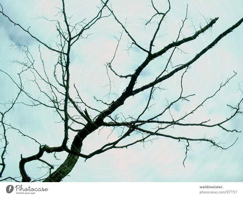 toter Ast Baum Wolken Tod Hoffnung Trauer Zweig