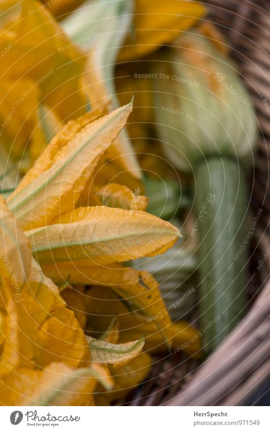 Fiori di zucca Pflanze grün Sommer gelb Blüte Gesundheit Lebensmittel frisch Gemüse lecker Markt Nutzpflanze Italienische Küche Marktstand Kürbisgewächse Zucchini