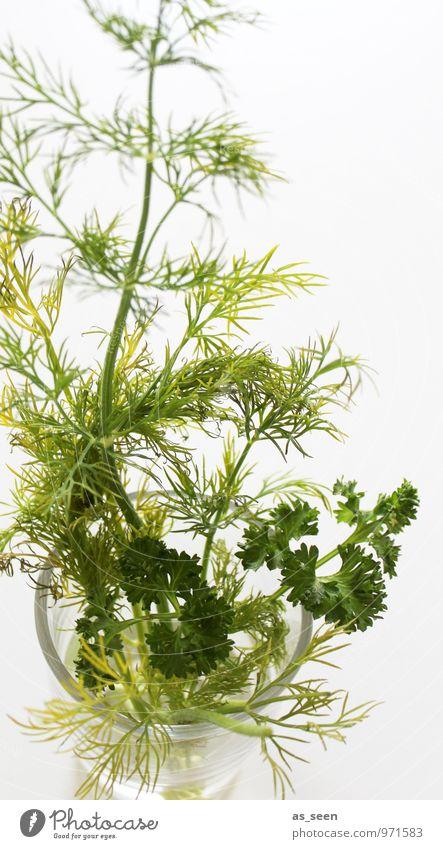 Petersilie und Dill grün weiß Blatt Gesunde Ernährung Leben Essen Gesundheit Lebensmittel Lifestyle Wachstum Glas frisch Kochen & Garen & Backen Wellness Fisch
