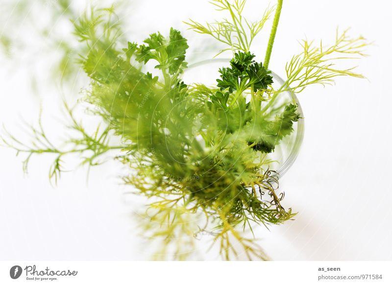 Frische Kräuter Lebensmittel Kräuter & Gewürze Petersilie Dill Ernährung Bioprodukte Vegetarische Ernährung Diät Glas Wellness Pflanze Duft genießen ästhetisch