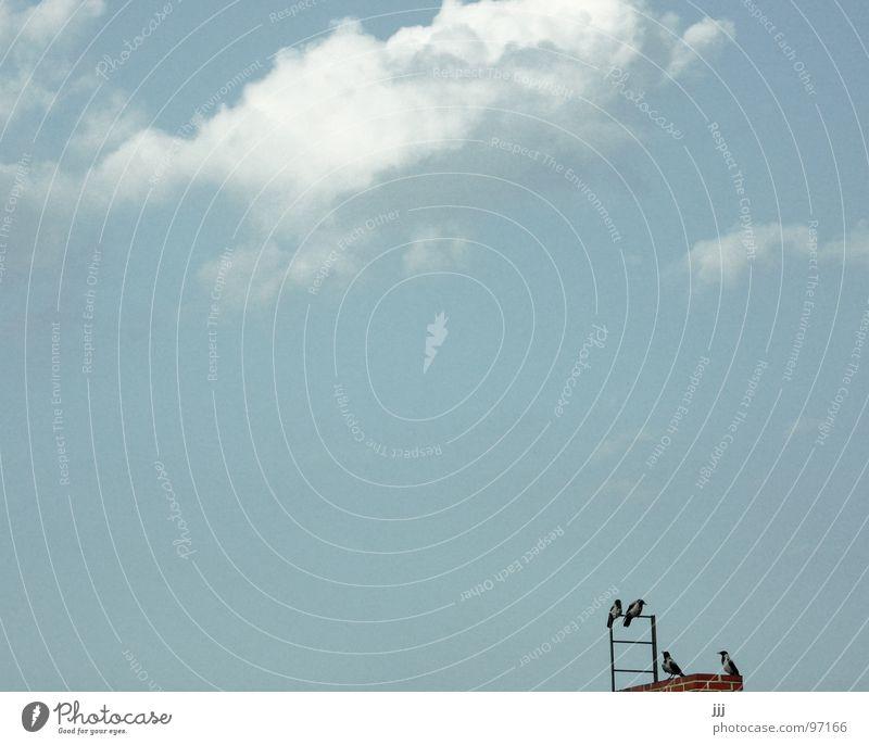 Piepmatzmeeting Himmel weiß Sommer Wolken schwarz Vogel fliegen frei Pause Dach Aussicht überblicken