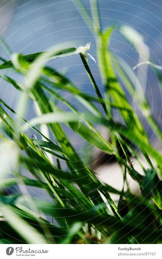 Grasgeflüster Wiese durcheinander Sommer Durchblick grün Hoffnung Umwelt Fluss Bach Küste Wetter Ruhrgebiet Freude Wildtier Natur