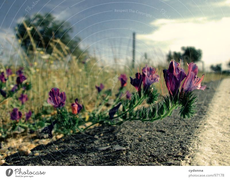Straßenschönheit Himmel Natur grün Ferien & Urlaub & Reisen Pflanze Sonne Sommer Blume Einsamkeit Landschaft Leben Blüte Linie Ausflug