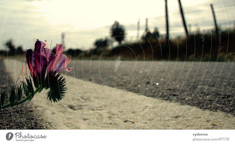 Trau dich! Himmel Natur grün schön Ferien & Urlaub & Reisen Pflanze Sonne Sommer Blume Einsamkeit Straße Landschaft Leben Blüte Linie Ausflug
