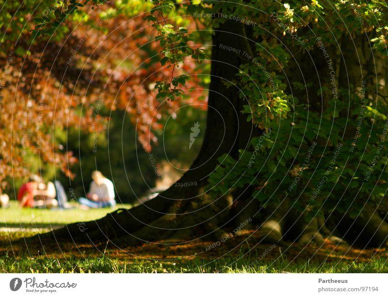 Frühlingserwachen Mensch Natur Sommer Baum Erholung Freude Wiese Gras Garten liegen Park sitzen mehrere Mecklenburg-Vorpommern Schwerin