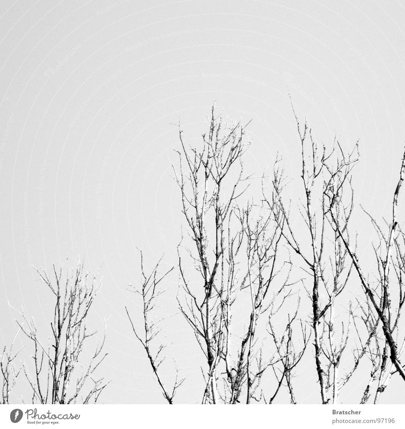 Winterreise (Franz Schubert) Schneelandschaft Wolken Trauer Hoffnung verlieren kalt Klavier wandern Gastronomie Verzweiflung Konzert Himmel karg Zweig bedecken