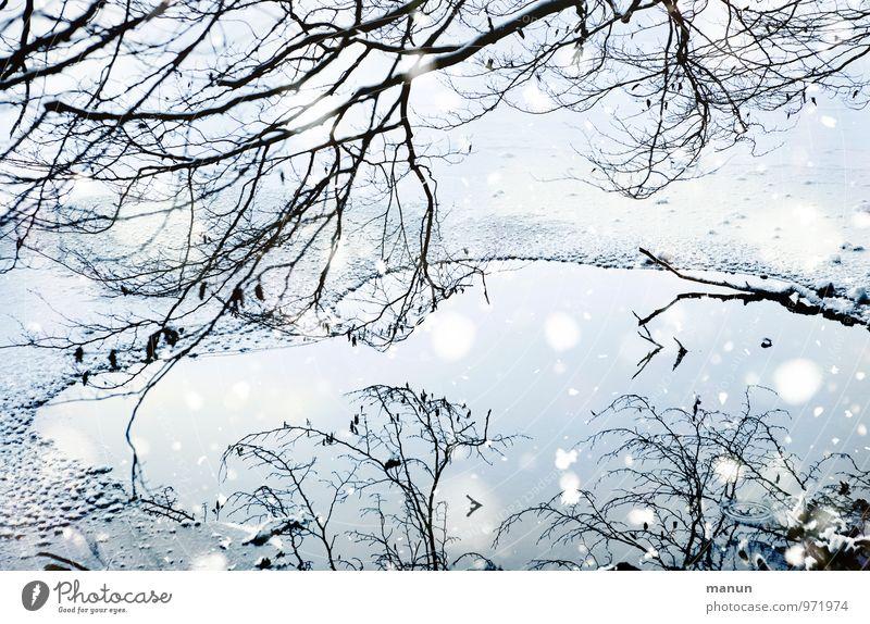 Eiszeit Natur blau weiß Wasser Baum ruhig Winter kalt Schnee natürlich Schneefall Eis Idylle Frost Seeufer Zweige u. Äste