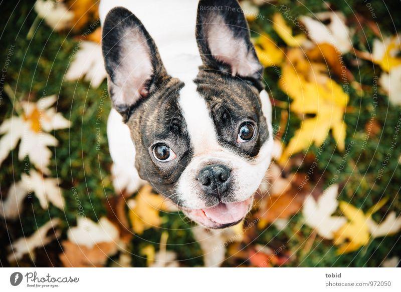 Cardhu Pt. 2 Hund Natur grün weiß Blatt Tier gelb Wiese Gras klein lachen braun leuchten beobachten weich Neugier