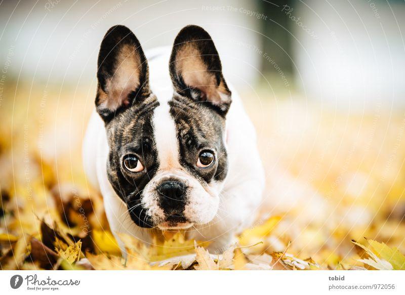 Cardhu Hund Natur Blatt Freude Tier Bewegung Wiese klein Park Idylle laufen Fröhlichkeit beobachten niedlich Schönes Wetter Freundlichkeit