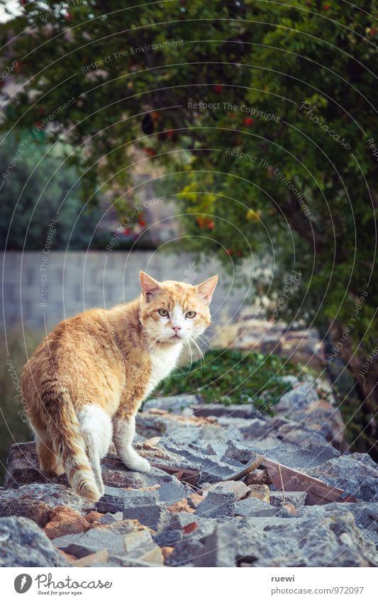 Just another cat Katze Natur grün Sommer Erholung rot Tier gelb Wand Mauer Stein orange wild warten einzeln beobachten