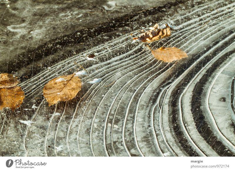 Eisblätter Natur Pflanze Wasser Blatt Tier Winter kalt Umwelt Traurigkeit Herbst Tod Wetter Klima Wassertropfen Frost