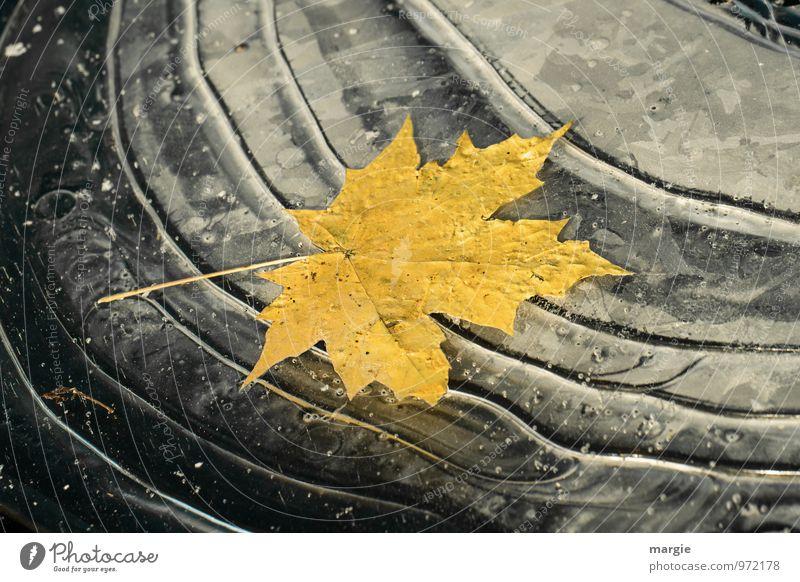Ein gelbes Herbstblatt eingefroren im Eis Umwelt Natur Pflanze Tier Wasser Wassertropfen Winter Klima Klimawandel Frost Baum Blatt Wellen Seeufer Teich alt