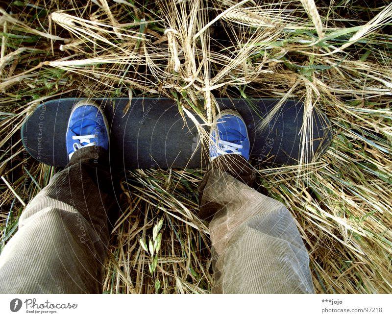 feldskaten. Spielen Bewegung Feld Verkehr Getreide Landwirtschaft Skateboarding Unsinn langsam Funsport Gerste Stuck unlogisch festhängen