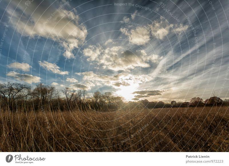 Daydreaming Himmel Natur Ferien & Urlaub & Reisen Pflanze Sommer Sonne Erholung Landschaft Wolken ruhig Ferne Umwelt Leben Freiheit Zufriedenheit Tourismus