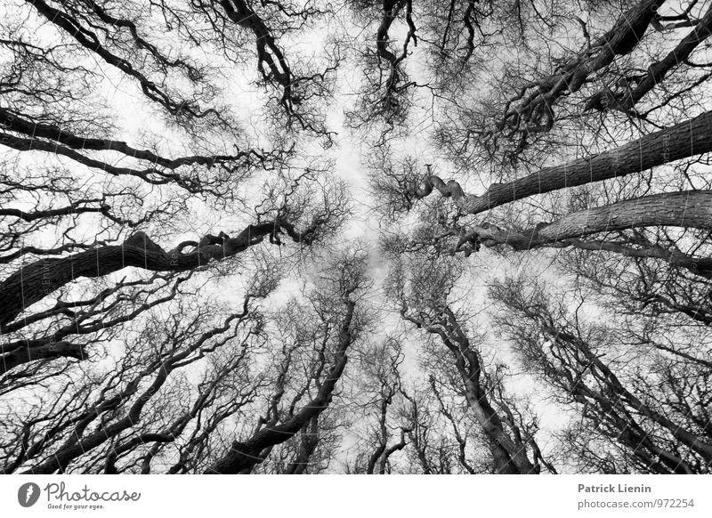 Waldgeister Natur Baum Erholung ruhig Ferne Umwelt Leben Ordnung Idylle Zufriedenheit Perspektive Urelemente einzigartig Neugier geheimnisvoll