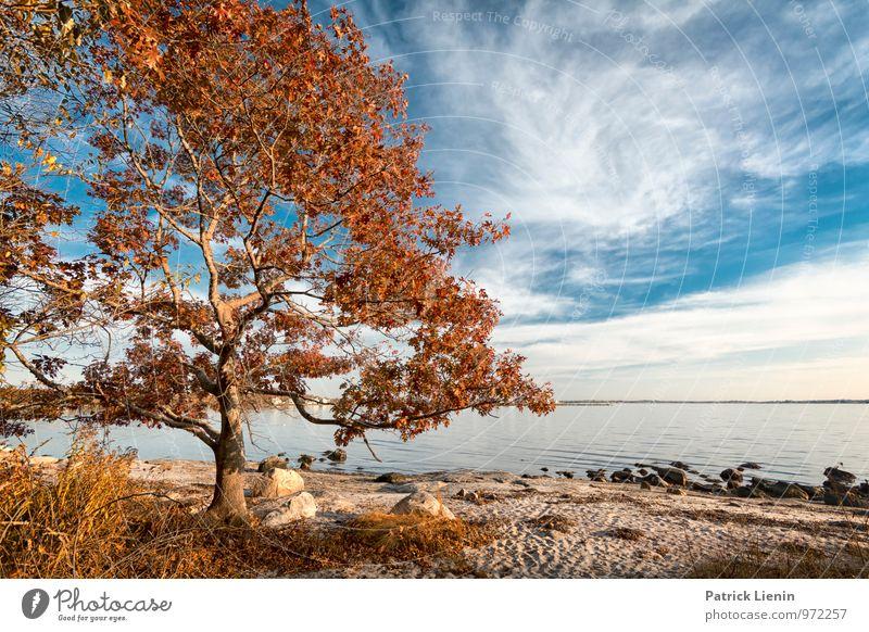 Meeresluft Wellness harmonisch Wohlgefühl Zufriedenheit Sinnesorgane Erholung ruhig Sommer Sonne Strand Umwelt Natur Landschaft Pflanze Urelemente Himmel Wolken