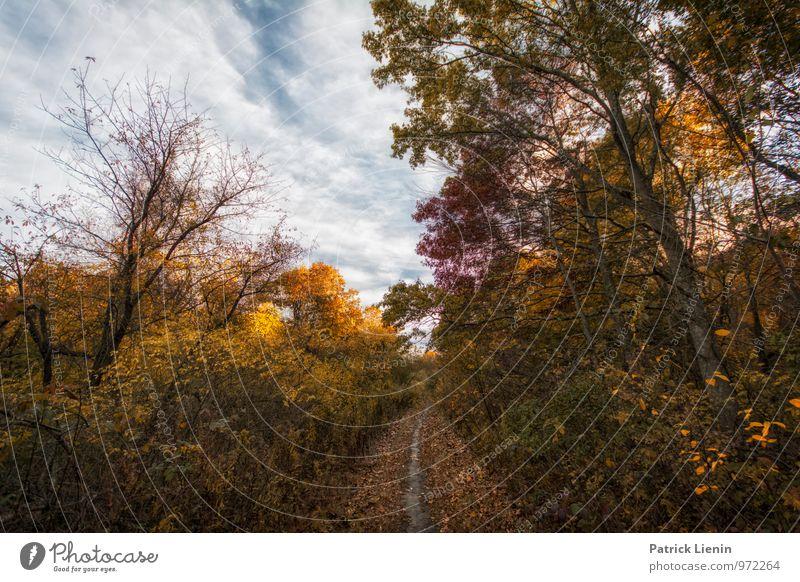 Waldpfad Himmel Natur Ferien & Urlaub & Reisen Pflanze Baum Sonne Erholung Landschaft Wolken Ferne Umwelt Herbst Wege & Pfade Freiheit Tourismus
