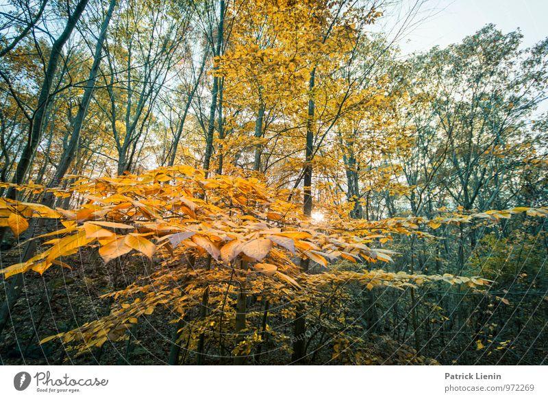 Farbenwald Wohlgefühl Zufriedenheit Sinnesorgane Erholung ruhig Tourismus Ausflug Abenteuer Ferne Freiheit Umwelt Natur Landschaft Urelemente Herbst Klima