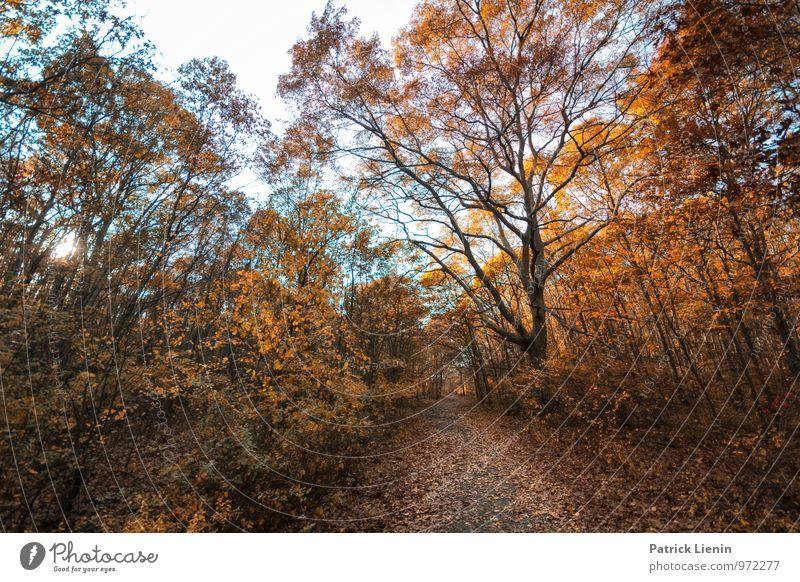 Waldspaziergang Wellness harmonisch Wohlgefühl Zufriedenheit Sinnesorgane Erholung Umwelt Natur Landschaft Pflanze Urelemente Sommer Herbst Klima Schönes Wetter