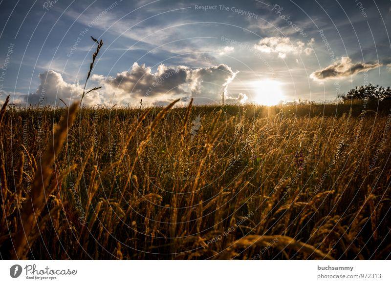 Abendstimmung Sommer Sonne Natur Tier Wolken Sonnenaufgang Sonnenuntergang Gras Wiese blau gelb Stimmung Europa Jahreszeiten Orange deutschland himmel Farbfoto