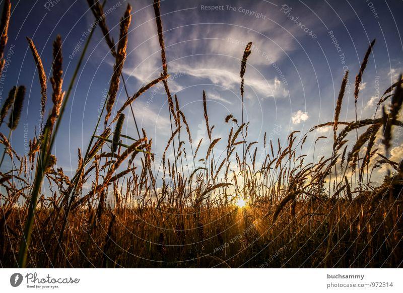Sonnenuntergang Sommer Natur Tier Wolken Wetter Schönes Wetter Pflanze Gras Wiese Feld blau gelb Stimmung Europa Jahreszeiten Orange deutschland himmel Farbfoto
