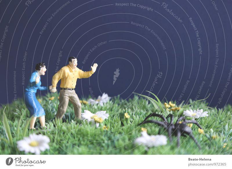 Ich glaube, ich spinne! maskulin feminin 2 Mensch 30-45 Jahre Erwachsene Landschaft Pflanze Tier Wolkenloser Himmel Sommer Blume Gras Park Spinne weinen