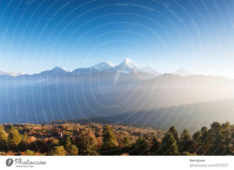 Good morning Anna Natur blau Pflanze Baum Landschaft Umwelt Berge u. Gebirge Herbst braun Luft Nebel authentisch wandern Aussicht Schönes Wetter Gipfel