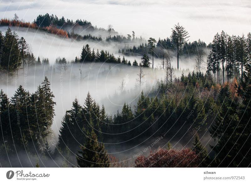 mystische Aussicht #2 Natur weiß Baum Einsamkeit Landschaft ruhig schwarz dunkel Wald kalt Herbst grau braun träumen Wetter Idylle