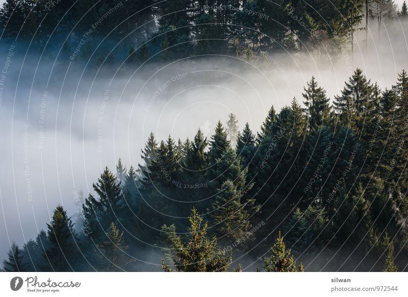 mystische Aussicht #3 Natur grün weiß Baum Erholung Landschaft ruhig Ferne Wald kalt Herbst Nebel Zufriedenheit einzigartig geheimnisvoll gruselig