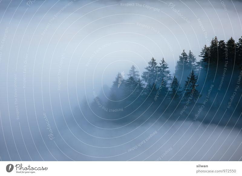 mystische Aussicht #4 Natur Landschaft Nebel Baum Wald alt bedrohlich dunkel Ferne groß gruselig kalt stachelig wild grau schwarz weiß ruhig träumen Angst