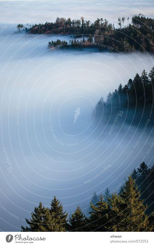 mystische Aussicht #5 Natur Herbst Nebel Baum Wald glänzend groß Unendlichkeit gruselig schön stachelig braun grau grün geduldig ruhig Traurigkeit Einsamkeit