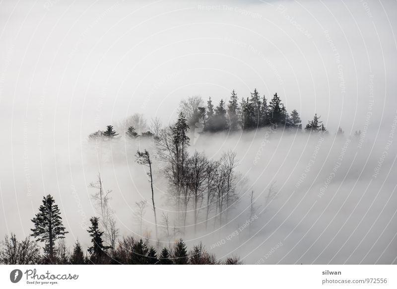 mystische Aussicht #6 Natur weiß Baum Landschaft ruhig Ferne schwarz Wald kalt Herbst grau orange Angst Nebel ästhetisch Spitze