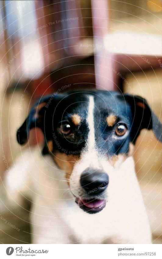 Dog's gaze Nahaufnahme Tier Day Looking At Camera One Animal Indoors Pets Color Image Nobody Vertical