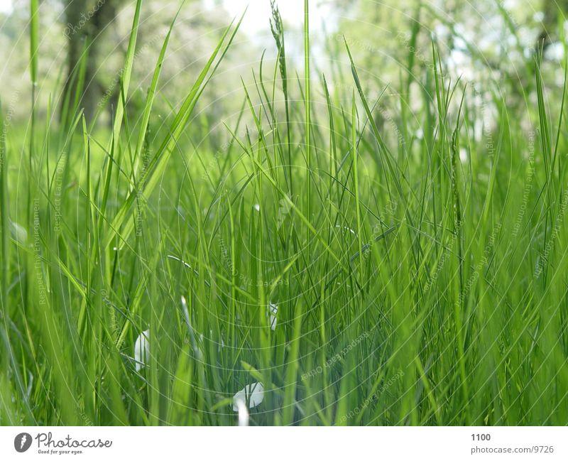 Wiesenblick Gras unten Froschperspektive grün Halm Blick Rasen