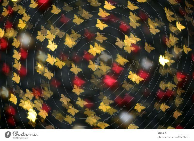 Muster Schmetterling Schwarm fliegen glänzend leuchten mehrfarbig Gefühle Stimmung Verliebtheit Schmetterlinge im Bauch Licht Unschärfe Farbfoto Nahaufnahme