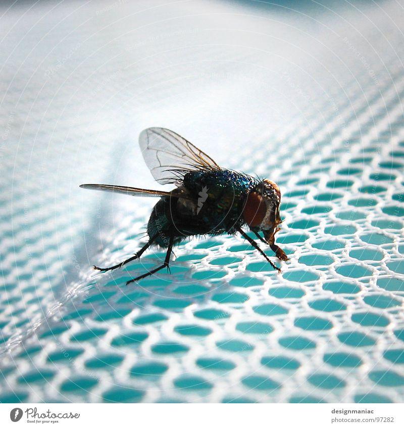 Survivor Schwimmbad hell-blau Insekt schwarz Unschärfe trocknen Sturmfrisur Fönfrisur klein groß Chlor Loch weiß gefangen Wellen verwebt Schnur Geschwader