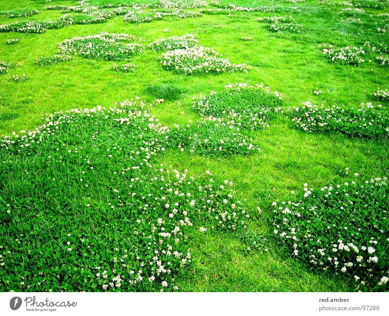 grasklar. Blume grün Sommer Gras Frühling weich Decke Erfrischung beruhigend einladend