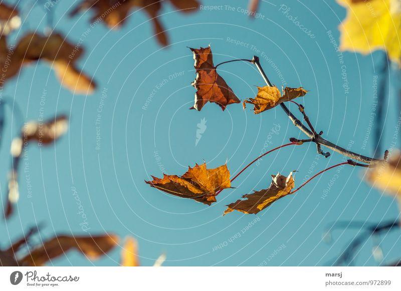 !Trash! | Herbst, aus und vorbei! Natur alt Pflanze Blatt Umwelt Traurigkeit Herbst natürlich Zusammensein authentisch Schönes Wetter Trauer Ende Verfall Herbstlaub herbstlich