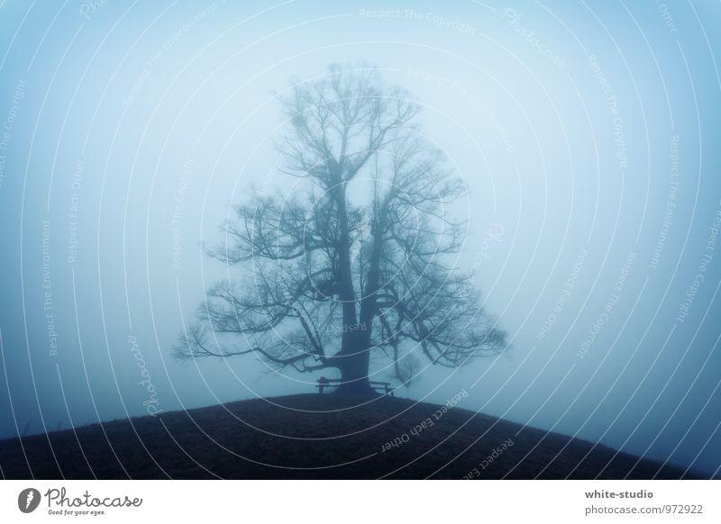 Mystisch Natur blau Wasser Baum Winter dunkel kalt Umwelt Herbst natürlich außergewöhnlich Schneefall Nebel groß einzeln ästhetisch