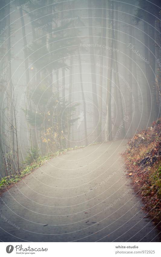 Geh da bitte nicht hinein! Baum Verschwiegenheit ruhig Traurigkeit Sorge Tod Angst Nebel Nebelschleier Nebelstimmung Nebelwald Wald Fußweg Wege & Pfade Straße