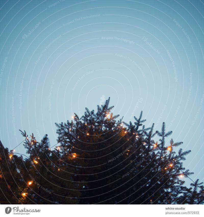 Es weihnachtet! Baum Vorfreude Weihnachten & Advent Weihnachtsdekoration Weihnachtsbeleuchtung Tanne Tannennadel Tannenzweig Lichterkette Froschperspektive