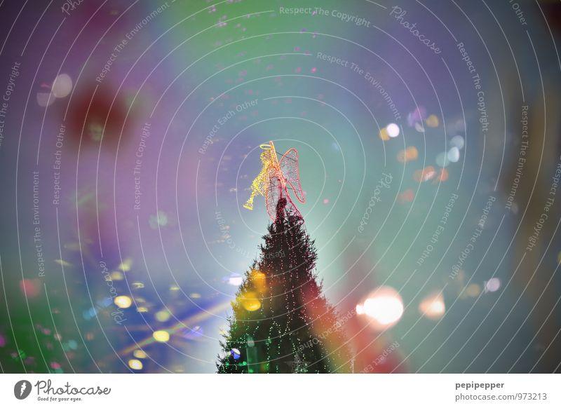 engel Feste & Feiern Weihnachten & Advent androgyn Körper Winter Baum Zeichen Ornament Engel mehrfarbig Stimmung Weihnachtsbaum Trompete Außenaufnahme