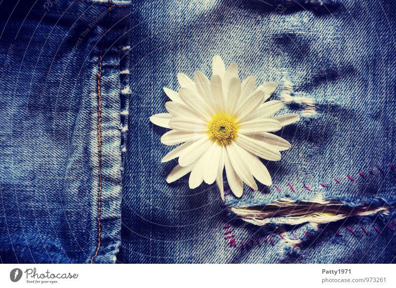 Flower Power Pflanze Blume Blüte Jeanshose Jeansstoff Hosenbeine Naht Riss Flowerpower Coolness trendy natürlich retro blau Gefühle Fröhlichkeit