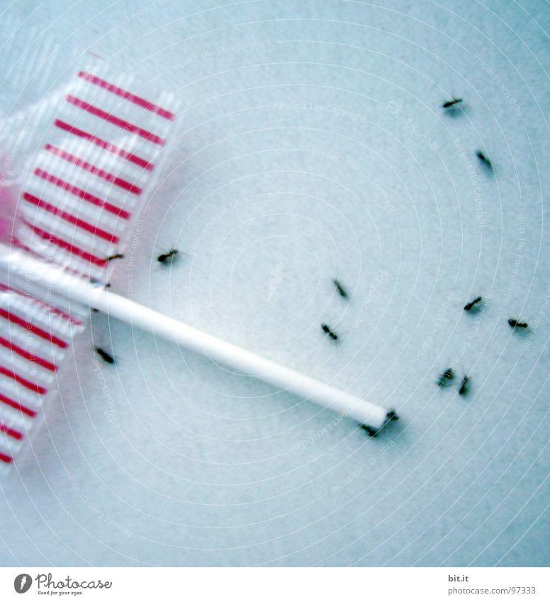 ARBEITERBEWEGUNG grau grün weiß rot rosa Ameise Tier Insekt Arbeiter Ameisenhügel fleißig Lollipop süß Süßwaren drehen Bewegung Fressen Mahlzeit Ernährung