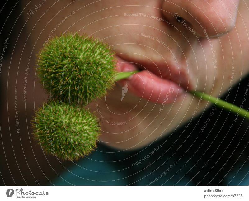 Frühstück. Vegetarisch Natur grün Sommer Ernährung Freiheit Gesundheit Essen Frucht frisch Lippen zart Gemüse Stachel stechen Maronen Vegetarische Ernährung