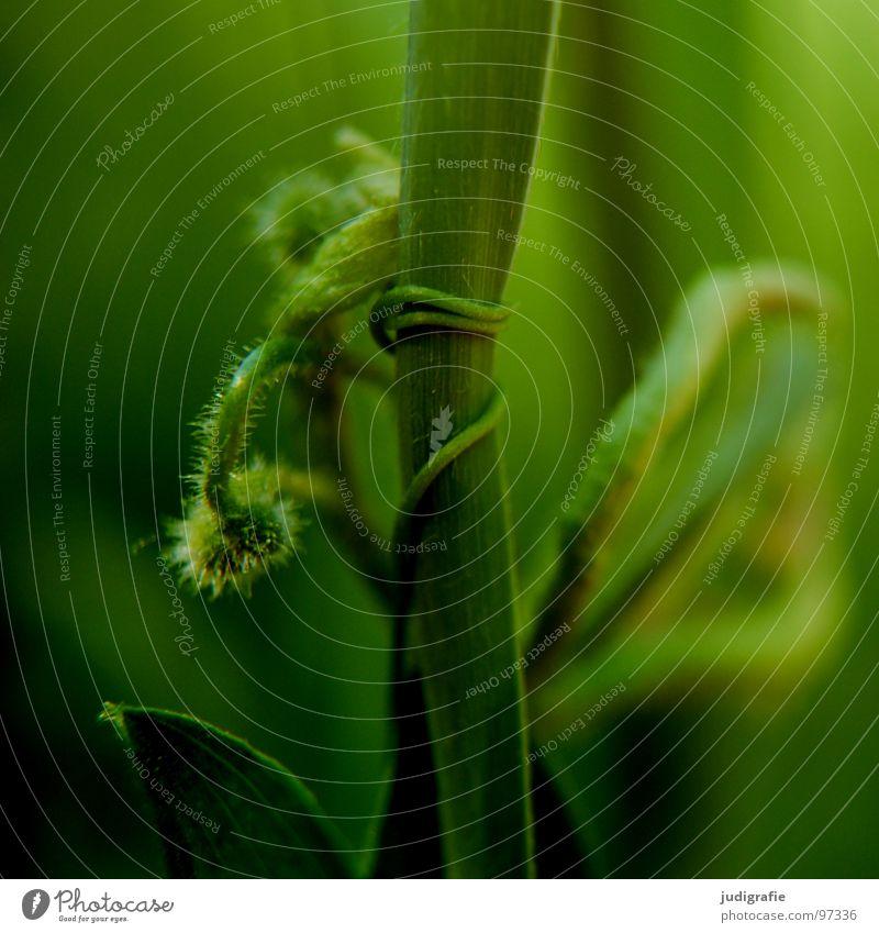 Gras Ranke Pflanze Heide Stengel rot braun grün schwarz Sommer Umwelt Wachstum gedeihen Wiese schön 2 stachelig Farbe umklammerung Wildtier Natur einfach Kugel
